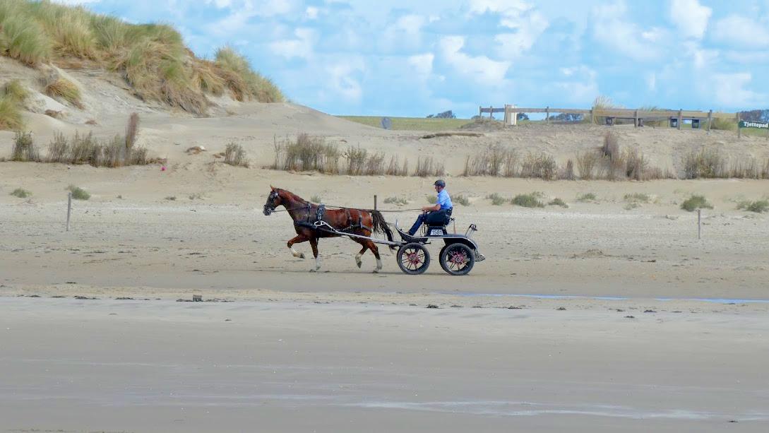 De Waddeneilanden, paardrijden op het strand van Ameland