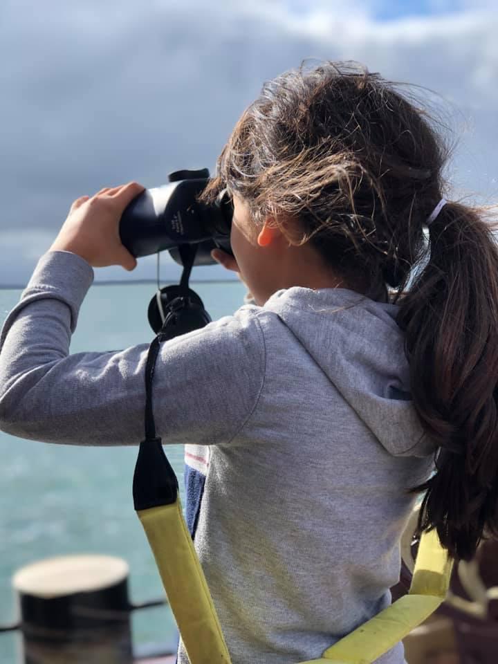 Zeehonden zoeken in het Waddengebied