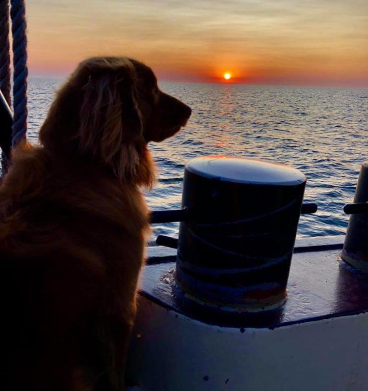 Scheepshond aan boord in de zonsondergang