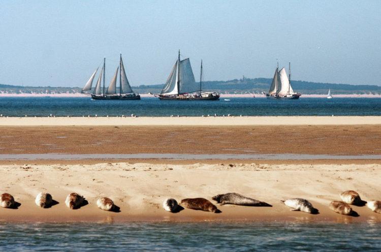 Zeehonden en zeilschepen in het Nederlandse Waddengebied