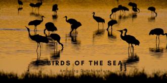 Birds of the Dutch Wadden Sea