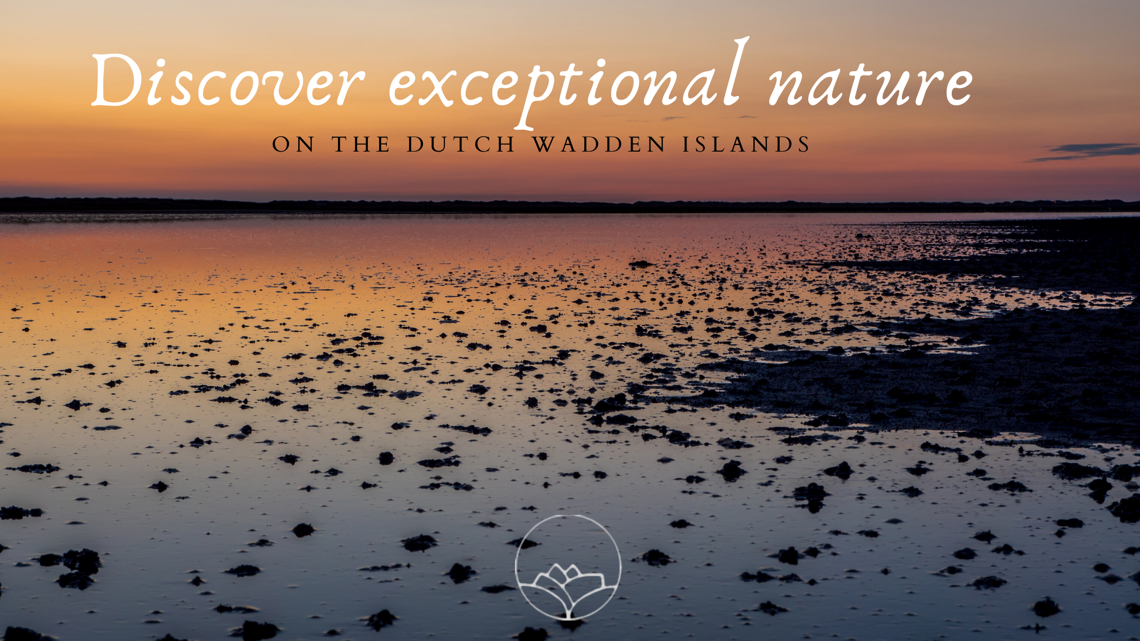 Discover exceptional nature on the Dutch Wadden islands