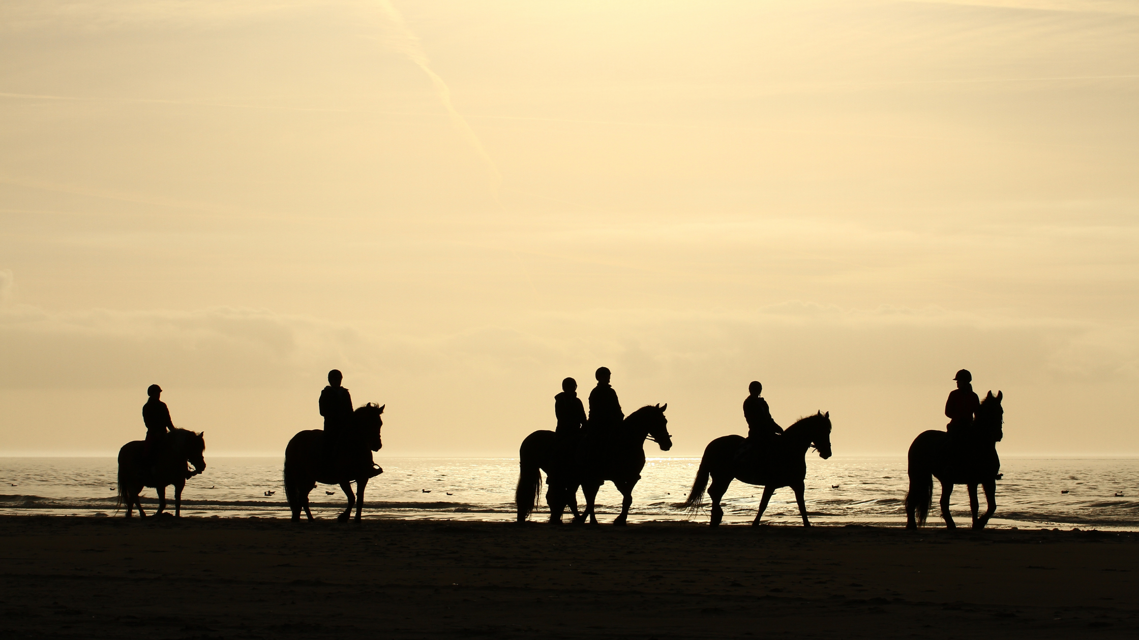 Horseback riding on the beaches of Terschelling