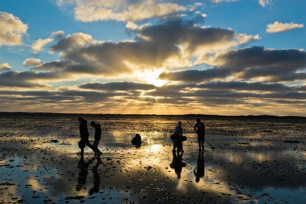 Kokkels zoeken op een zandbank in de Waddenzee