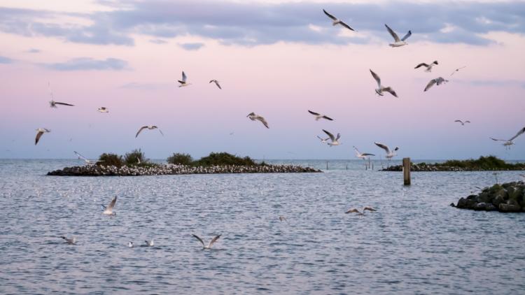Vogels bij natuurgebied 'De Kreupel'